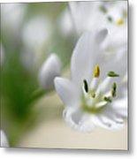White Blossom 2 Metal Print