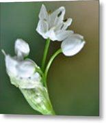 White Blossom 3 Metal Print