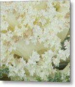 White Cabbage Metal Print