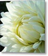 White Dahlia Flower Art Print Canvas Floral Dahlias Baslee Troutman Metal Print