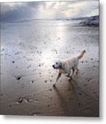 White Dog Metal Print