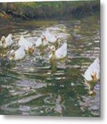 White Ducks On Water Metal Print