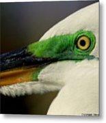 White Egret 1 Metal Print