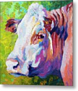 White Face Cow Metal Print