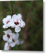 White Floral On Green Metal Print