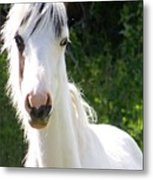 White Indian Pony Metal Print