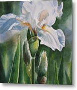 White Iris With Bud Metal Print by Sharon Freeman