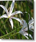 White Lillies Metal Print