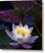 White Lily Rising Metal Print