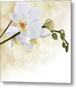 White Orchid Flower Metal Print by Pics For Merch