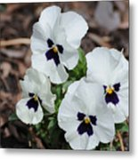 White Pansies Metal Print
