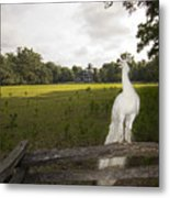 White Peacock At Magnolia Plantation Metal Print