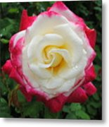 White Red Rose Metal Print