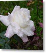 White Rose In Rain Metal Print
