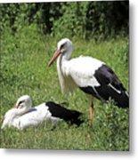 White Storks Metal Print