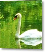 White Swan Swim In Pond Metal Print