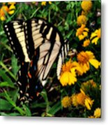 White Wing Butterfly Metal Print