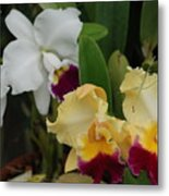 White Yellow Orchids Metal Print