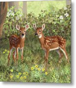 Whitetail Deer Twin Fawns Metal Print by Crista Forest