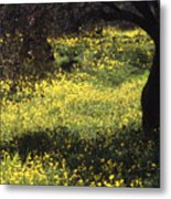 Wild Flowers In An Olive Grove Metal Print