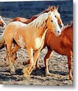 Wild Horses Running Metal Print
