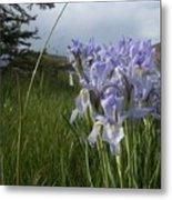 Wild Iris II Metal Print