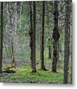 Wild Spring Forest Metal Print