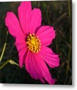 Wildflower Greeting The Day Metal Print
