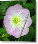 Wildflowers - In The Pink Metal Print