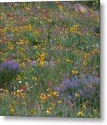 Wildflowers Abundance Metal Print