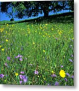 Wildflowers And The Oak Metal Print