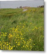 Wildflowers At Cape Spear Metal Print
