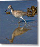 Willet Searching For Food In An Oyster Bed Metal Print
