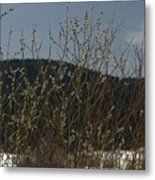 Willows In Snow Metal Print