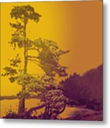 Windblown At Twilight Metal Print