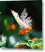 Winged Butter Metal Print