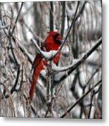 Winter Cardinal Metal Print