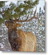 Winter Edibles Metal Print