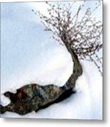Winter Finery Metal Print