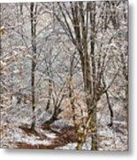Winter Forest Metal Print by Gabriela Insuratelu