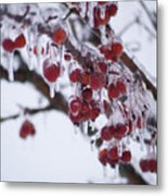 Winter Ice Berries Metal Print