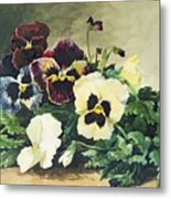 Winter Pansies Metal Print
