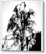 Winter Sky Wood Storks Metal Print