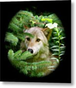 Wolf Thick Of The Woods Metal Print