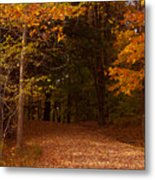 Wonderful Fall Colors Metal Print by Robert  Torkomian