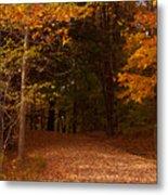 Wonderful Fall Colors Metal Print by Robert  Torkomian