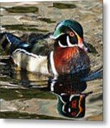 Wood Duck 1 Metal Print