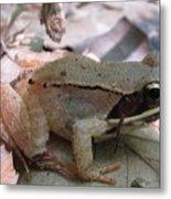 Wood Frog  Metal Print