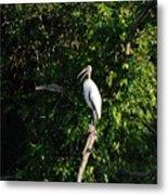 Wood Stork-out On A Limb Metal Print