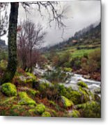 Woods Landscape Metal Print